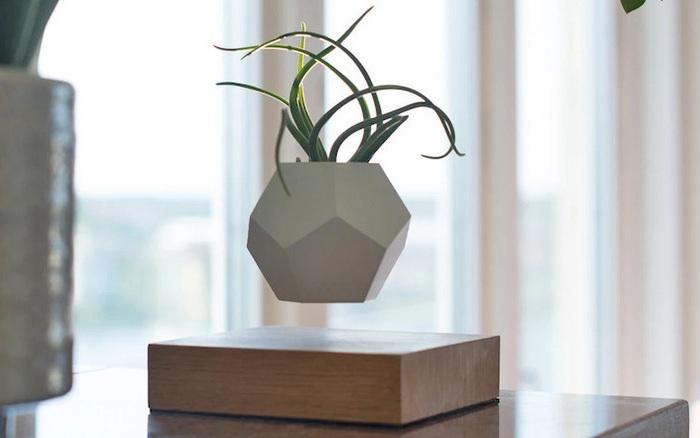 Kinh ngạc với thiết kế chậu cây lơ lửng có giá hơn 1 triệu đồng, vừa trang trí nhà đẹp vừa có công dụng làm tinh thần sảng khoái