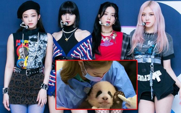 Lần đầu tiên, BLACKPINK được netizen Hàn lên tiếng bênh vực sau khi bị Cnet chỉ trích nặng nề việc ôm gấu trúc
