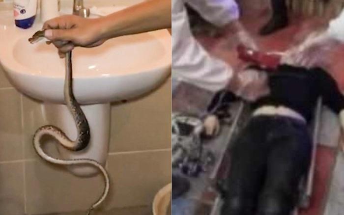 Dùng rắn độc ép cô gái quan hệ tình dục, người đàn ông chưa kịp