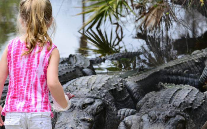 Đang chơi dưới hồ, bé gái bị cá sấu dài hơn 2m tấn công và chỉ nhờ một hành động vào mũi con vật mà thoát chết ngoạn mục