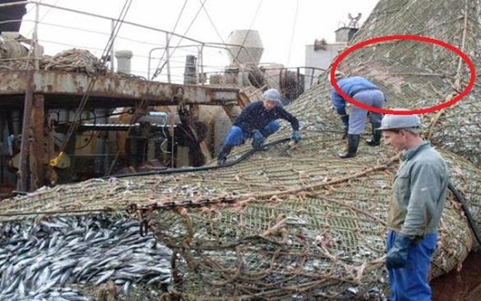 Vui như mở cờ trong bụng vì đánh được mẻ cá lớn, ngư dân hào hứng trút lưới thì kinh ngạc khi nhìn thấy thứ này bên trong