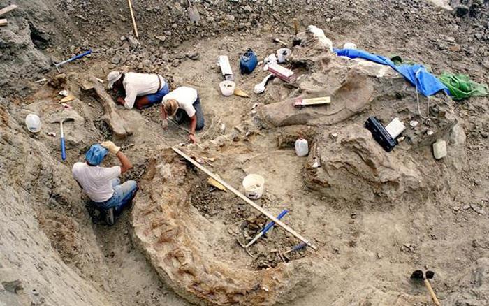 Đang đi khảo sát địa hình, bánh xe ô tô của các nhà khảo cổ học bị thủng lốp nào ngờ nhờ đó mà khám phá ra điều diệu kỳ