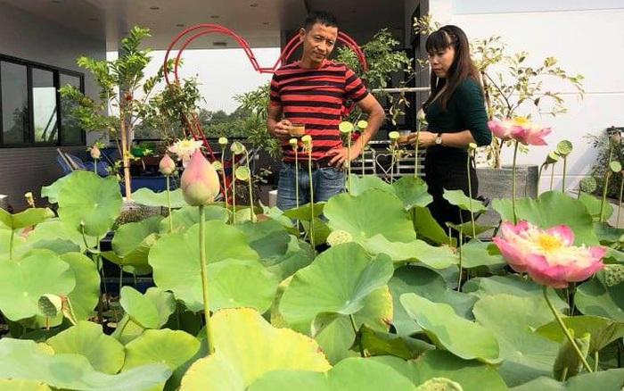 Doanh nhân Sài Gòn trồng cả vườn rau và hoa như trang trại rộng ...