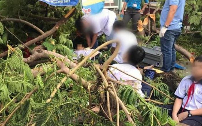 Vụ cây phượng bật gốc đè 13 học sinh bị thương: 1 học sinh đã tử vong