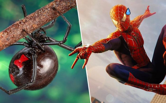 """3 anh em tự cho con nhện độc nhất thế giới cắn nhằm """"biến thành ..."""