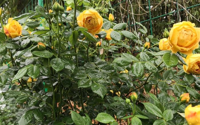 Mảnh đất trống 200m² được cải tạo thành vườn hoa đẹp như công viên