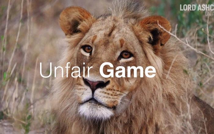 Số phận bi thảm của sư tử nuôi nhốt ở Nam Phi: 12.000 cá thể chờ chết phục vụ săn bắn ...