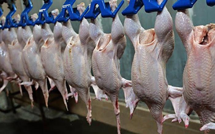 Trung Quốc ngừng nhập khẩu gia cầm của Mỹ do lo ngại virus SARS CoV-2