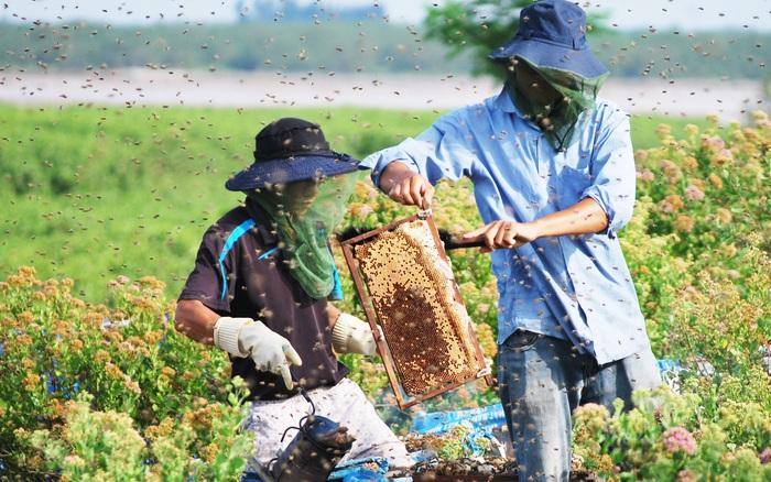 """Nông dân thu nhập """"khủng"""" nhờ nuôi ong lấy mật từ ..."""