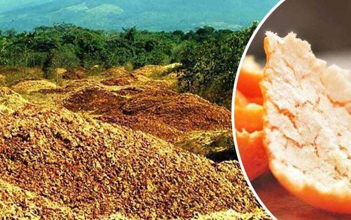 Công ty nước ép đổ 12 nghìn tấn vỏ cam xuống khu đất trống đến nỗi bị kiện, 16 ...