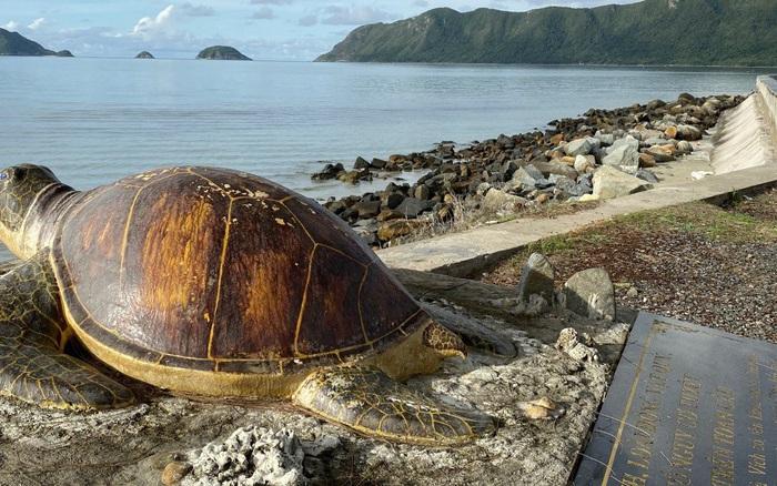 Đây là vùng ngắm rùa biển đẹp nhất ở Việt Nam được báo ...