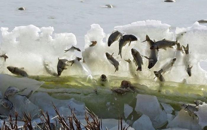 Cảnh tượng ngoạn mục những con cá bị đóng băng ngay khi vừa nhảy lên khỏi mặt ...
