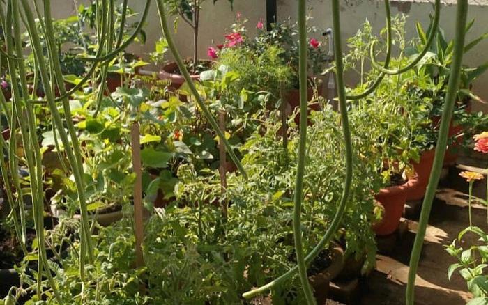 """Sân thượng chung cư ấn tượng với """"bạt ngàn"""" rau quả sạch được trồng theo phương pháp hữu cơ"""
