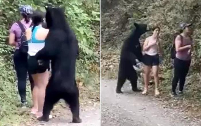 Dân Mexico tức tối vì gấu đen bị thiến sau khi