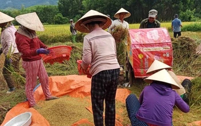 Cả nhà đi cách ly, hàng xóm bảo nhau giúp gặt lúa, phơi thóc - kết quả xổ số đồng nai