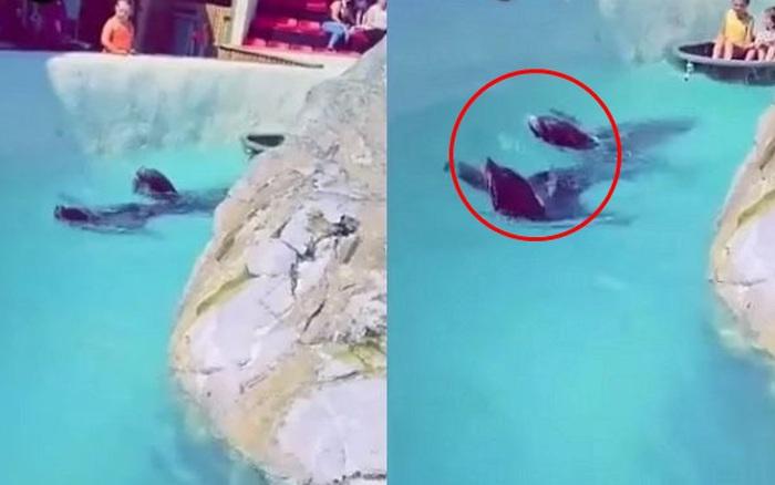 Đoạn clip quay 2 chú hải cẩu bơi quanh hồ nhưng món đồ trên cổ chúng lại gây chú ý và khiến hàng nghìn dân mạng