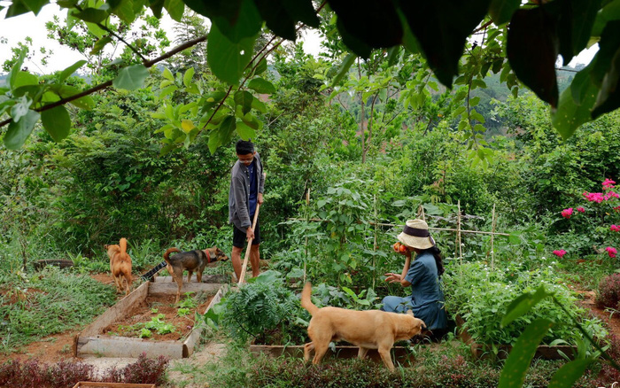 Khu vườn xanh tươi rộn ràng cây lá của cặp đôi quyết rời Sài Gòn tấp nập về núi rừng Tây Nguyên tìm chốn bình yên - kết quả xổ số tiền giang
