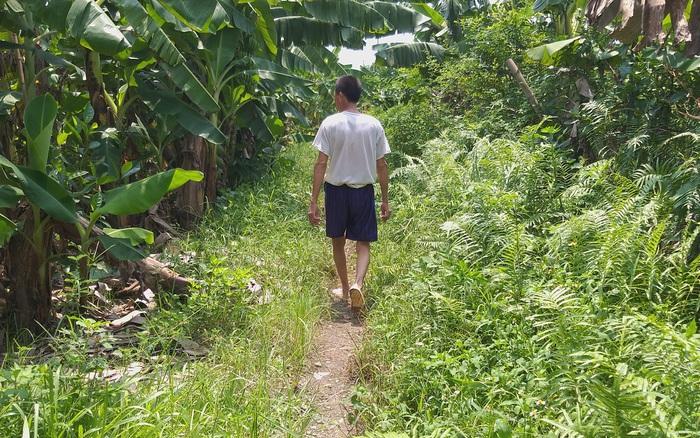 Cục Trẻ em đề nghị làm rõ vụ bé gái ở Hà Nội nghi bị đối tượng lạ mặt đưa vào vườn chuối hiếp dâm