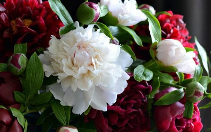 Những bông hoa rực rỡ trông vô cùng tươi tắn nhưng ẩn chứa sự thật gây choáng váng, nhỡ tay một chút là
