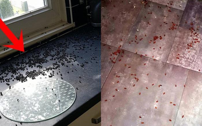 Nhà đang ở đột nhiên bị hàng ngàn con ruồi và giòi bọ xâm chiếm, bà mẹ hoang mang bế con trai bỏ đi rồi