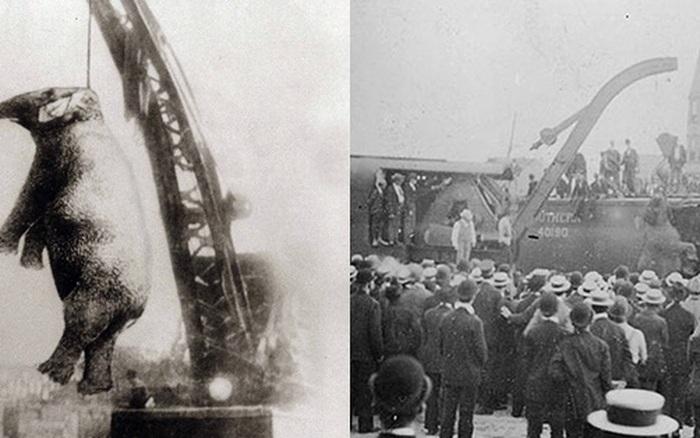 Bức hình như tranh vẽ nhưng sự thật là ảnh chụp và phía sau đó là câu chuyện con voi bất hạnh nhất trong lịch sử khiến nhiều người rơi lệ