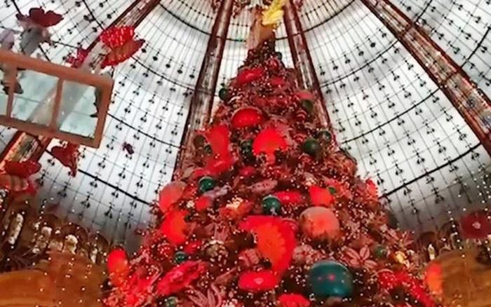 Noel năm 2020 sẽ vắng bóng cây thông tại Pháp?