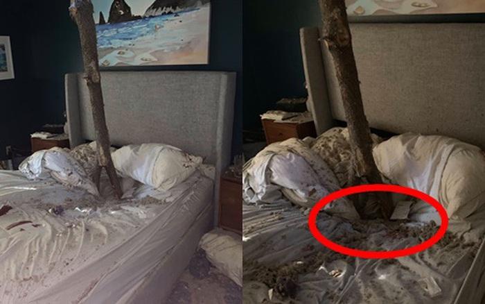 Đang ngủ ngon lành, cặp vợ chồng bị cây đổ đâm lõm cả giường, xem lại ảnh hiện trường mới thấy bản thân cận kề cái chết thế nào