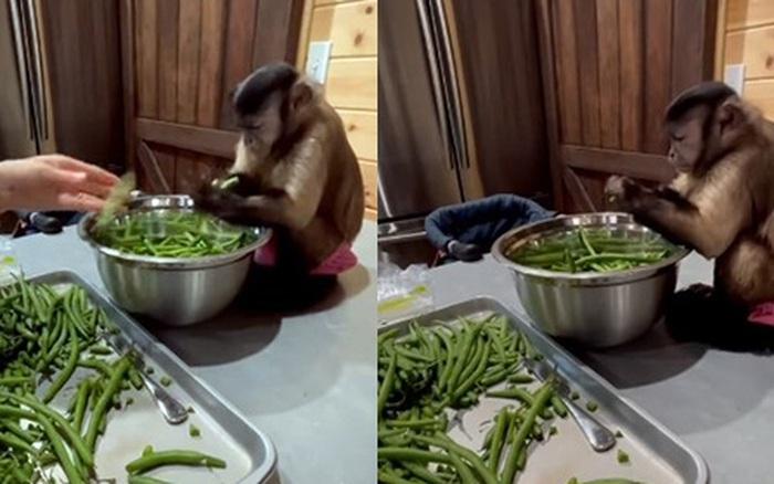 Clip chú khỉ ngồi cặm cụi nhặt rau như con người thu hút 5 triệu lượt xem, tưởng gương mặt lạ nhưng hóa ra lại là