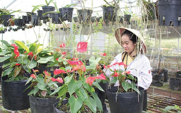 5 điều bạn cần phải biết để không bị lỗ vốn khi bán hoa ngày Tết