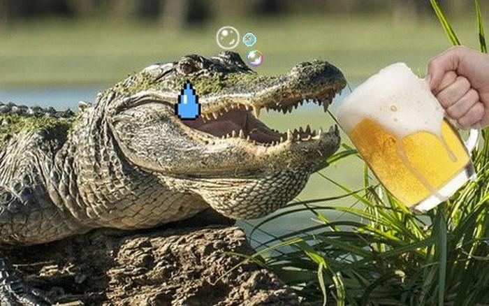 Ép cá sấu uống bia, hai thanh niên Mỹ phải nộp phạt 175 triệu đồng