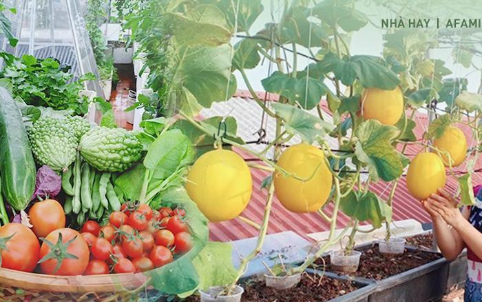 Bà mẹ Hà Nội với đam mê trồng đủ loại dưa sai quả trên sân thượng nhỏ hẹp