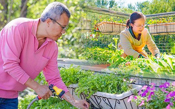 """Người đàn ông 57 tuổi vừa có sự nghiệp vừa tạo lập vườn rau xanh ở """"biệt thự"""" ..."""
