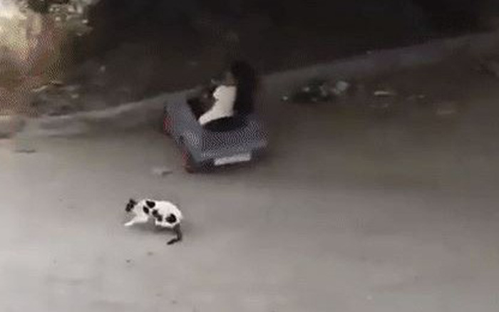 """Cô bé với màn """"cua xe"""" khét lẹt khiến chú mèo tội nghiệp bay lộn ..."""