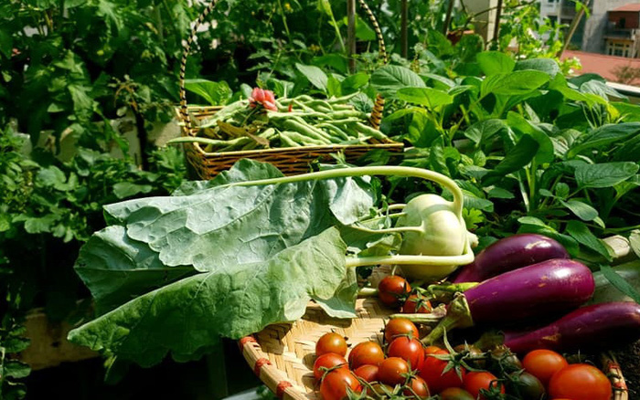 Vườn rau mùa đông với đủ loại rau xanh tươi của mẹ đảm ở Ninh Hiệp, Hà Nội - kết quả xổ số khánh hòa