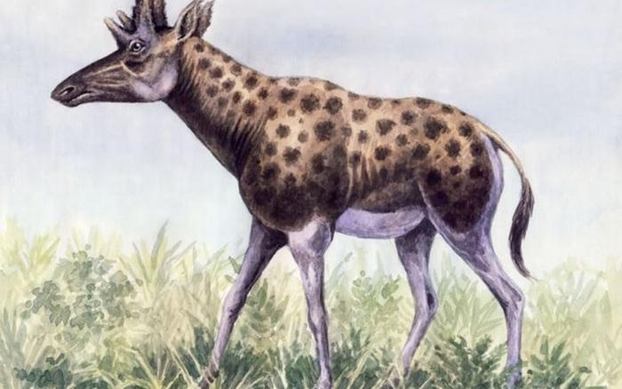 Phát hiện mới, Trung Quốc cũng đã từng tồn tại loài hươu cao cổ với ... - xổ số ngày 16102019