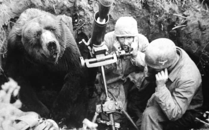 Chuyện ít người biết về cuộc đời kì lạ của binh nhì gấu Wojtek