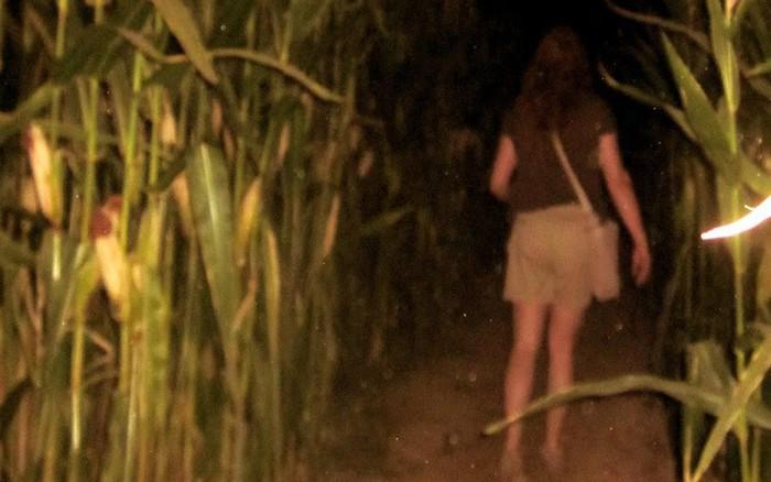 Con gái 16 tuổi thường xuyên lẻn ra ruộng ngô vào nửa đêm, bố mẹ theo dõi ...