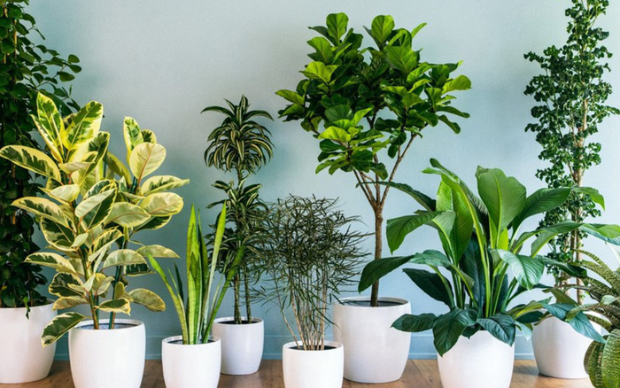 """10 loại cây cảnh không cần quá nhiều nắng lại chịu được điều hòa, """"cứu ..."""