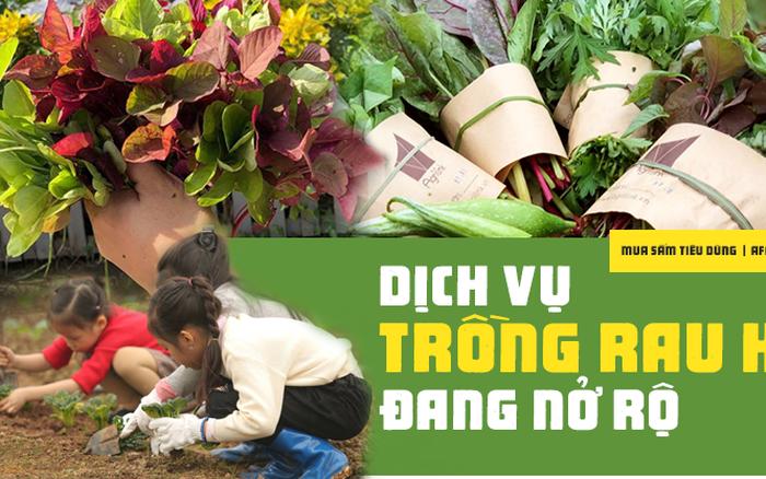 """Dân Hà Nội thích thú với dịch vụ trồng rau hộ, """"đổ xô"""" đầu tư ..."""