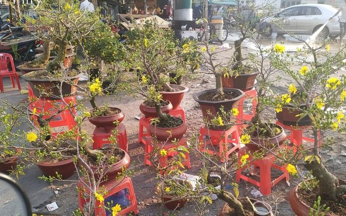 """Đi sắm hoa Tết ở """"chợ miền tây"""" Sài Gòn: bạt ngàn cúc, mai, ..."""