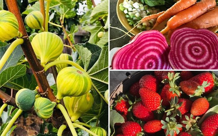 Khu vườn quanh năm tươi tốt với đủ loại cây trái của cặp vợ chồng thích ăn chay